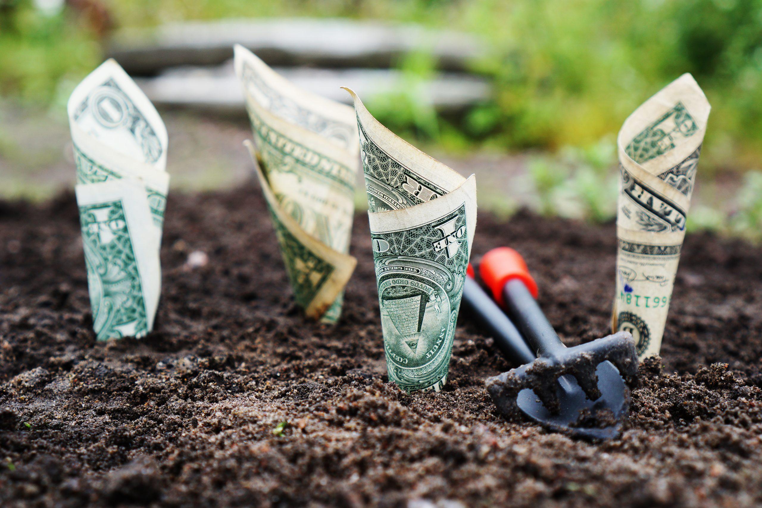 Money growing in the dirt